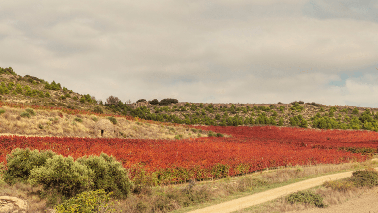 Otoño en Rioja